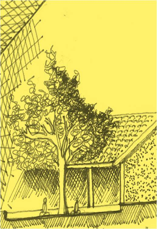 A courtyard tree also can be a shaded spaces that can function as a class  room.