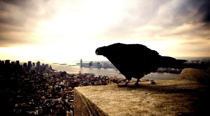 city_sky_bird_pigeon_high_contrast_hd-wallpaper-101264